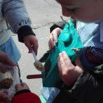 Una mangiatoia per uccelli : ragioniamo, troviamo soluzioni e chiediamoci il perché